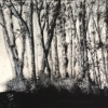 Landscape - Oil Paintings - Monochrome Forest - © Russell Collins
