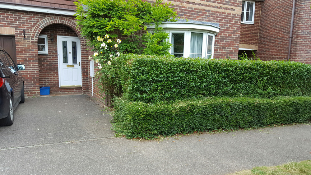 My Front Hedge
